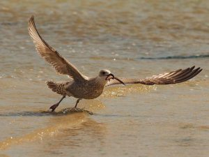 Birds of Bretagne